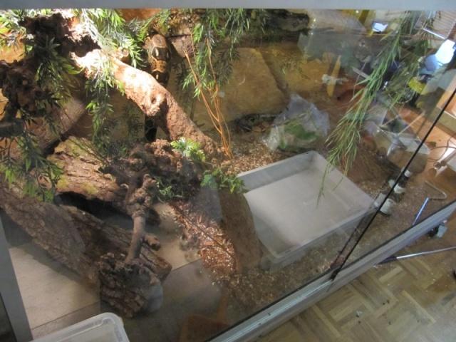 taille de boa constrictor et terrarium Img_4210