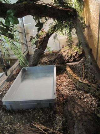 taille de boa constrictor et terrarium Img_4212