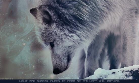 Vidéo Officielle de Legends Of Wolves Image12