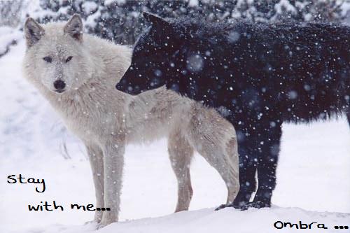 Vidéo Officielle de Legends Of Wolves Kazzed12