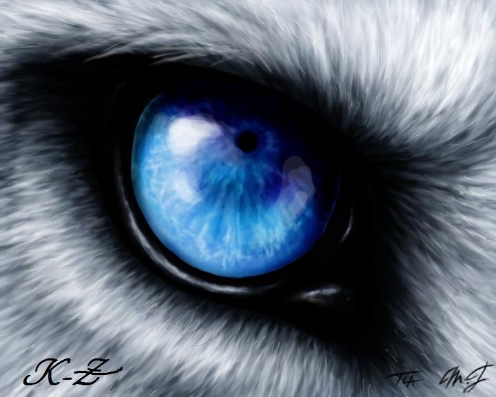 Vidéo Officielle de Legends Of Wolves Kz10