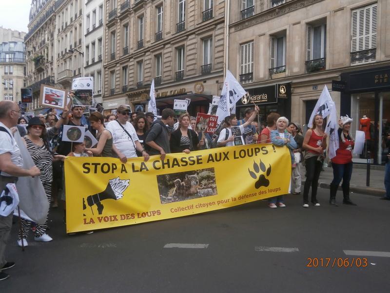 STOP AUX TIRS DE LOUPS  P6030029