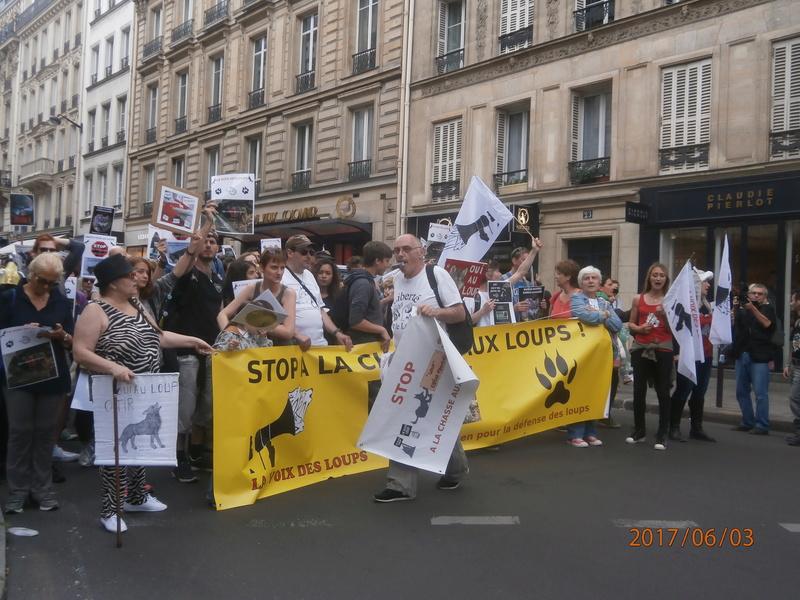 STOP AUX TIRS DE LOUPS  P6030030