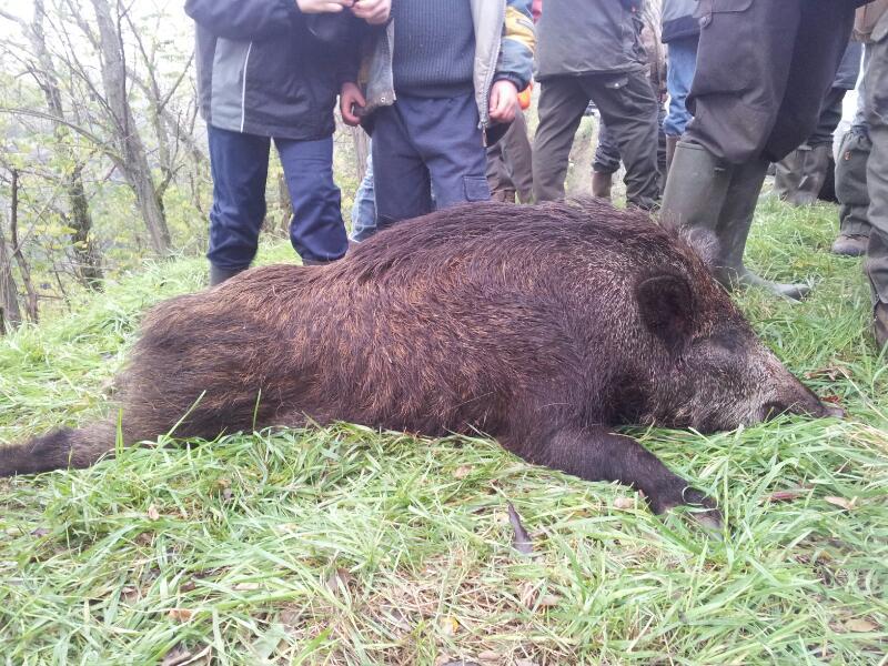 Saison de chasse au Grand Gibier 2013/2014 - Page 2 Rps20111