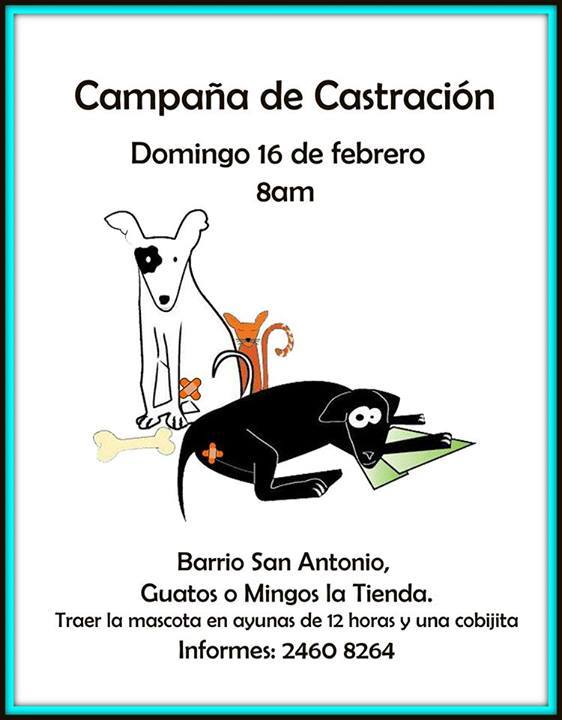 Castraciones 16 febrero San Antonio Alajuela 10112510