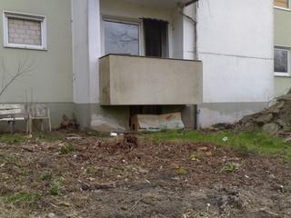 Die freien Katzen haben ein neues Zuhause bekommen 01012015