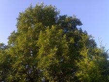 Bäume und Sträucher  10082011