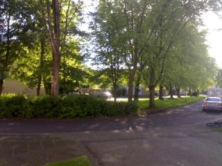 Bäume und Sträucher  23052020