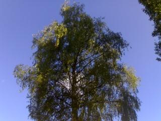 Bäume und Sträucher  23052022
