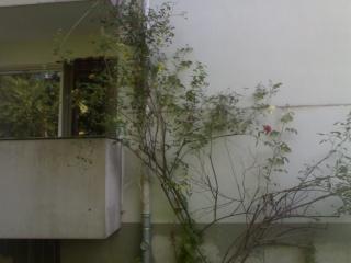 Bäume und Sträucher  23052024