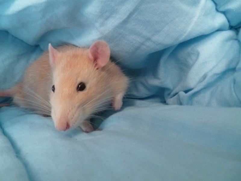 13 petit rats en Bretagne  - Page 3 Image_10
