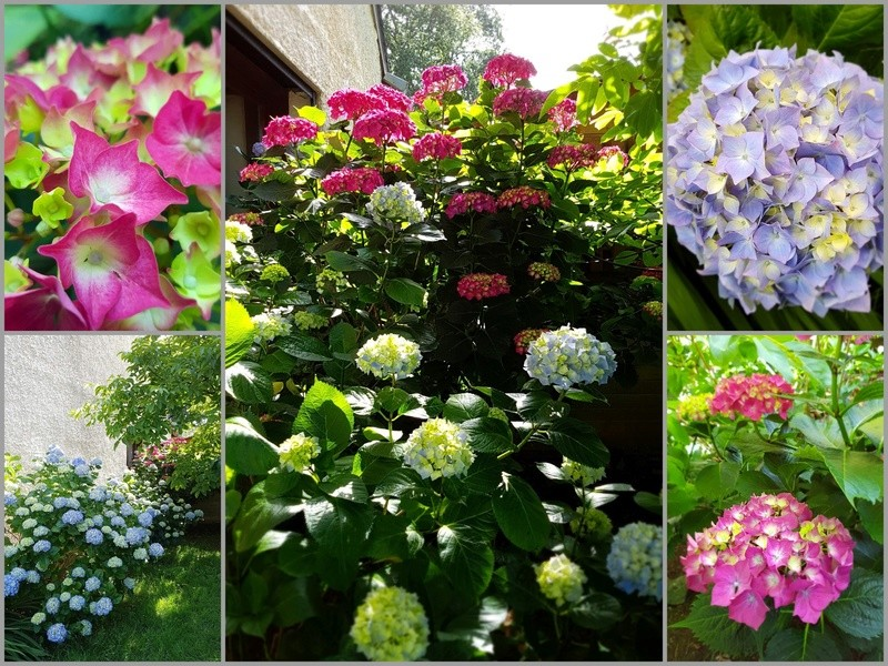 Au jardin en ce moment ! Horten11