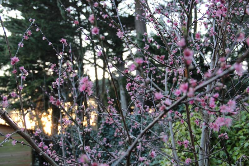 un air de printemps... :) Img_8611