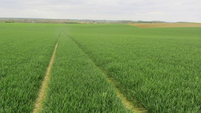 suivi des blés tendre 2017 - Page 3 0121