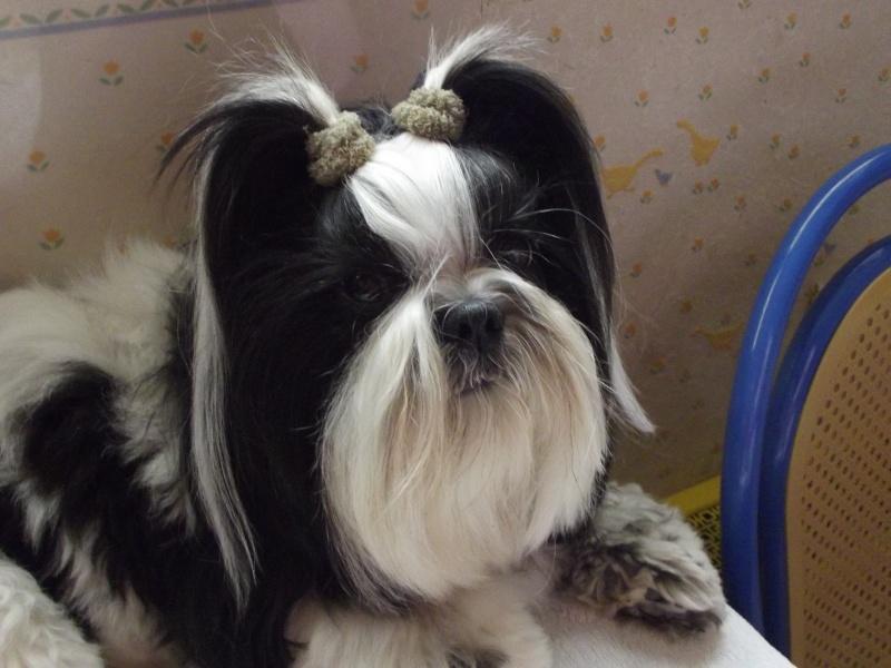 mes amours de chiens 23_03110