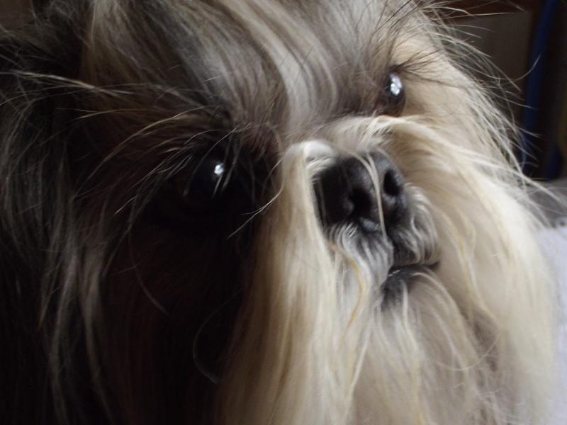 mes amours de chiens 23_03610