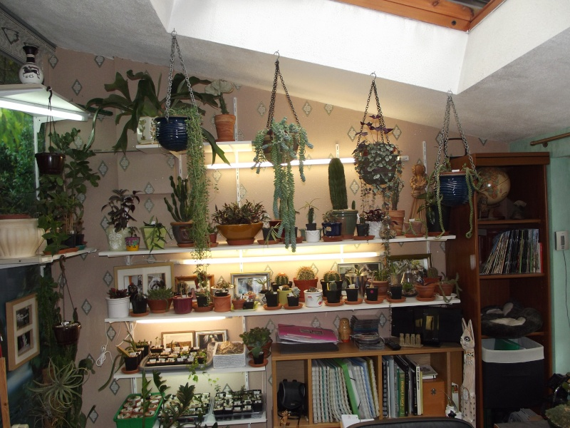 Photos de succulentes pour cloo 28_nov10