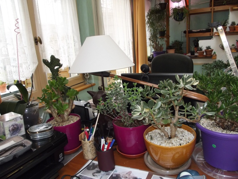 Photos de succulentes pour cloo 28_nov11