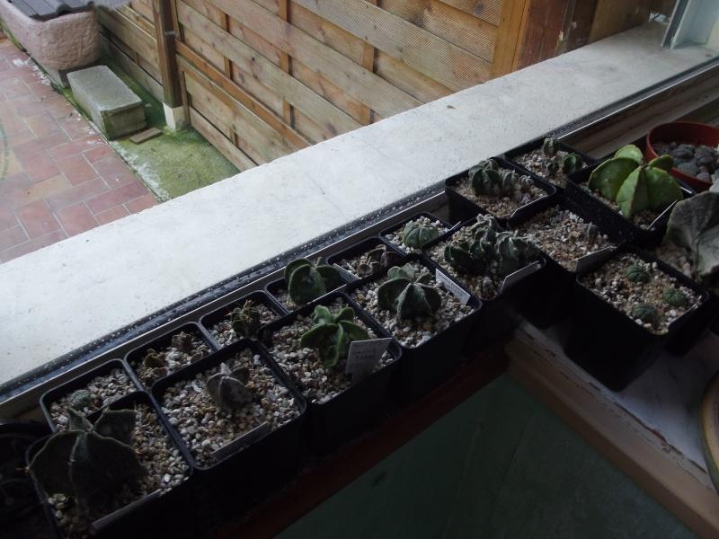 photos Cactus et Succulentes (fin) Jhdjd_10