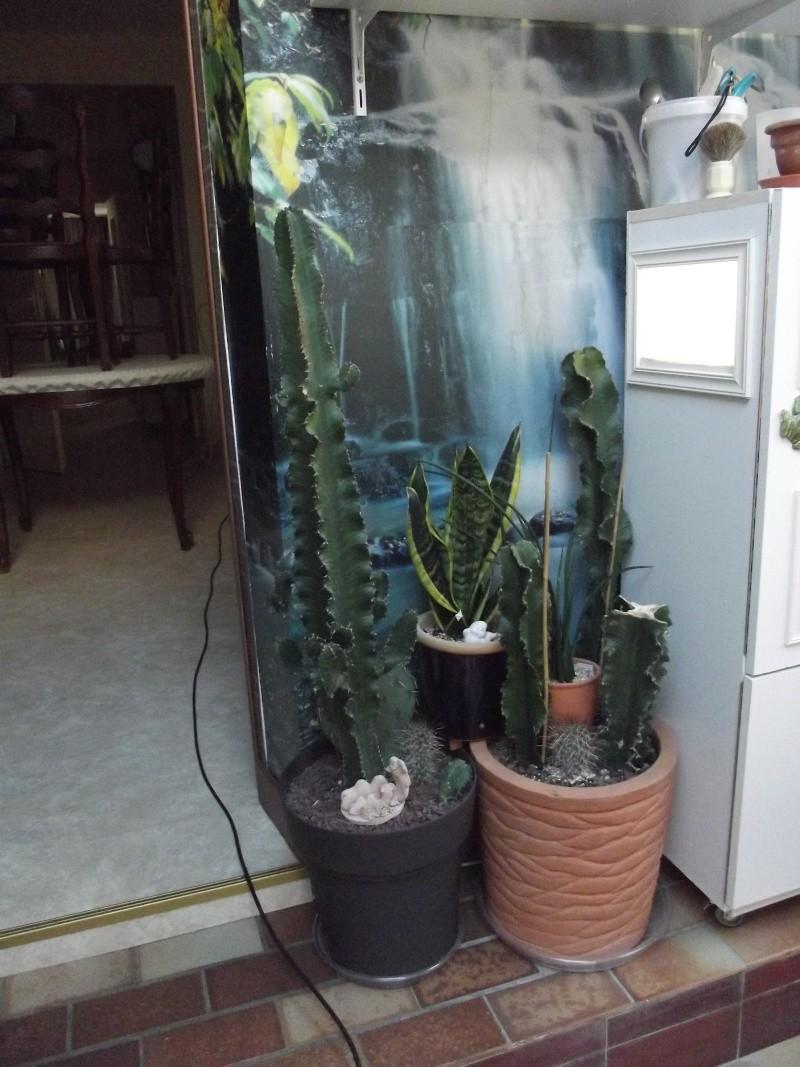 photos Cactus et Succulentes (fin) Jhdjd_11