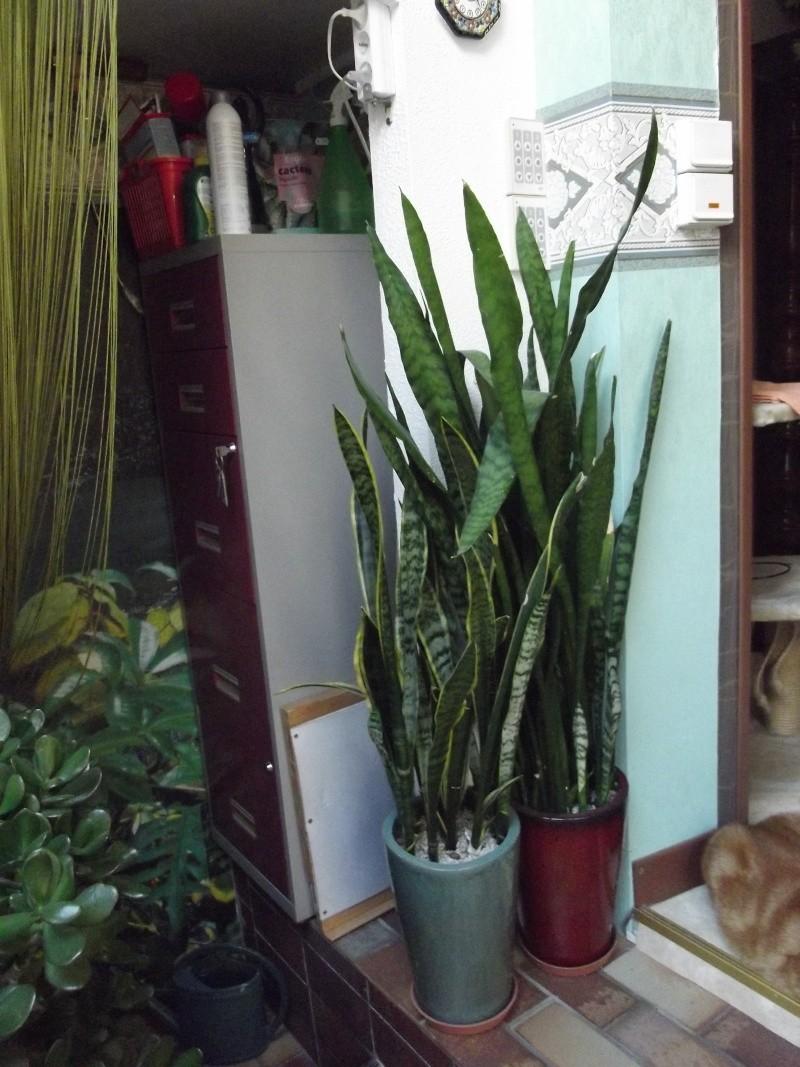 photos Cactus et Succulentes (fin) Jhdjd_12