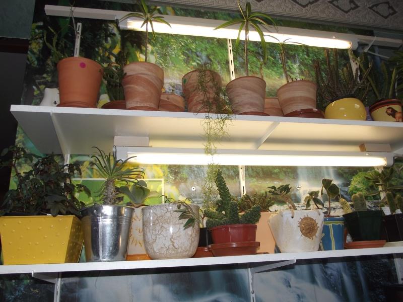 photos Cactus et Succulentes (fin) Jhdjd_13