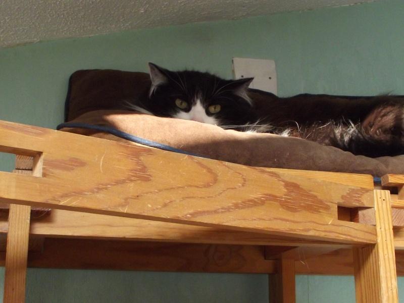 Mes amours de chats Mozart10