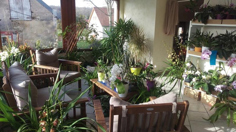 Les orchidées de nounoucaro MAJ 08/05/14 - Page 5 Imag5210