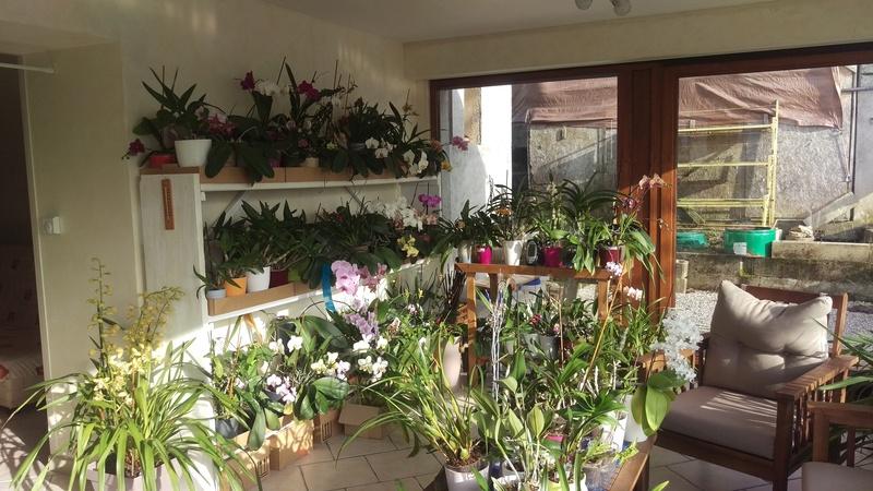 Les orchidées de nounoucaro MAJ 08/05/14 - Page 5 Imag5211