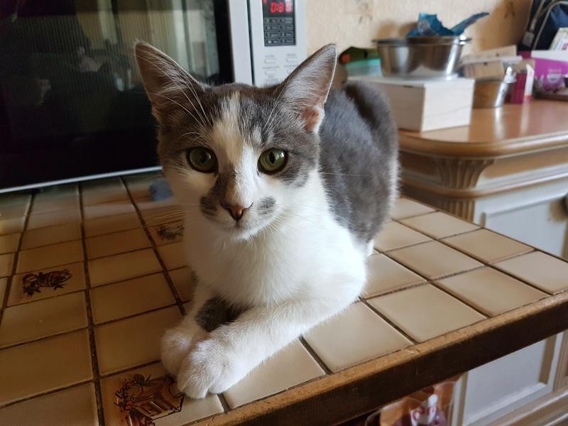 VOYOU, chaton mâle, né en Août/septembre 2016 (Pascani) - en FA chez Abysse (dpt92) - ADOPTE PAR VALERIE (92) 20170613