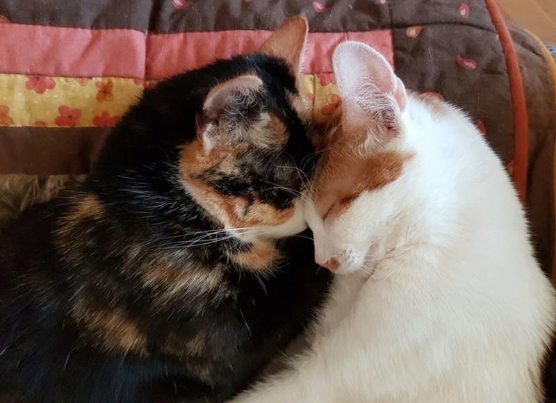MITSY ( ex SATINE), chaton femelle née en mars 2016 - Pascani - adoptée par Abysse (dpt92) - PARTIE REJOINDRE LES ETOILES le 3 juillet 2017 .... - Page 2 Tartin10