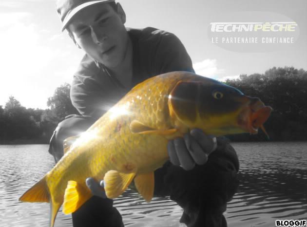 poisson en or ;) 737f5b10