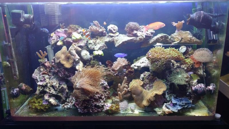 Trombinoscope des bacs en eau de mer 20140422