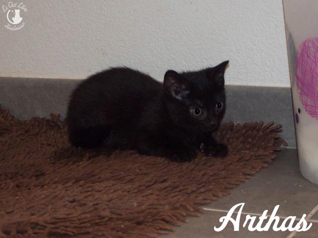 [ Adoptions ] Tous les samedis 14h - 18h chez CANICAT  - Page 5 Arthas10