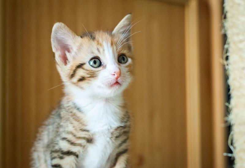 C'est la saison des ( abandons de ) chatons : pourquoi adopter chez nous ?  N-008511