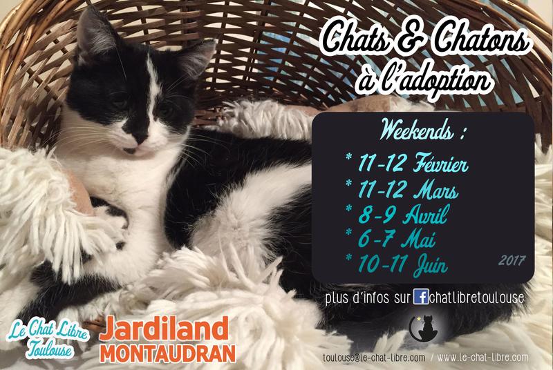 [ Adoptions ] Samedi 6 & Dimanche 7 avril 2017 :  Jardiland Montaudran Recap-12