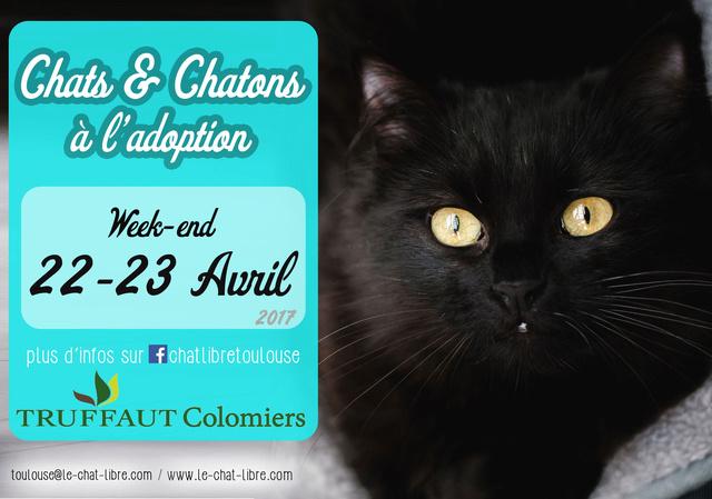 [ Adoptions ] Samedi 22 & Dimanche 23 avril 2017 : Truffaut Colomiers Truffa10