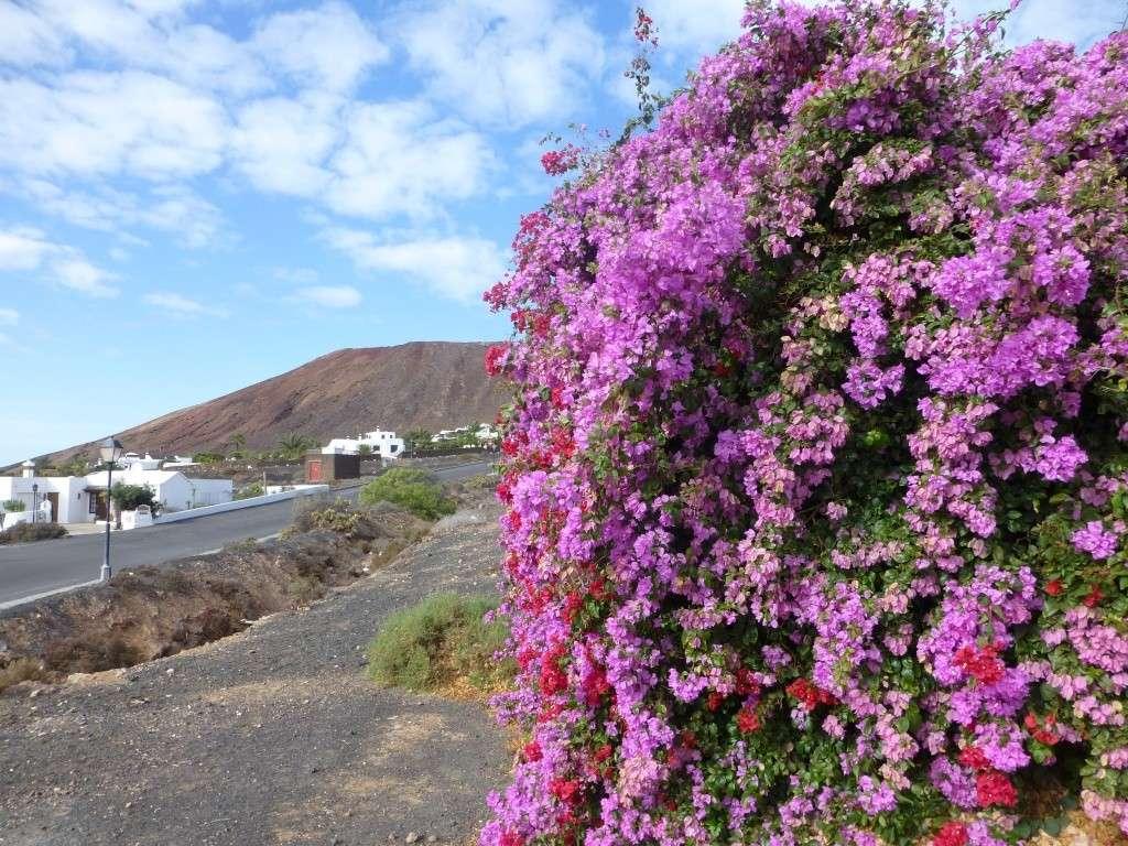 Canary Islands, Lanzarote, Playa Blanca, 2013 - Page 2 01813