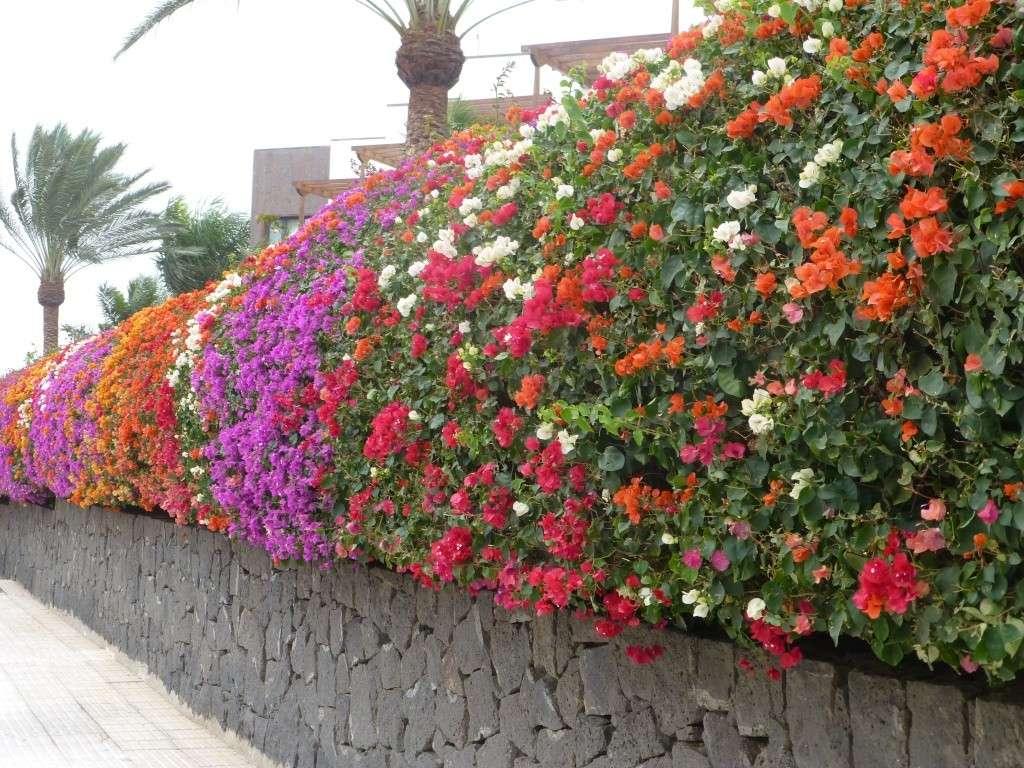 Canary Islands, Lanzarote, Playa Blanca, 2013 - Page 2 06614