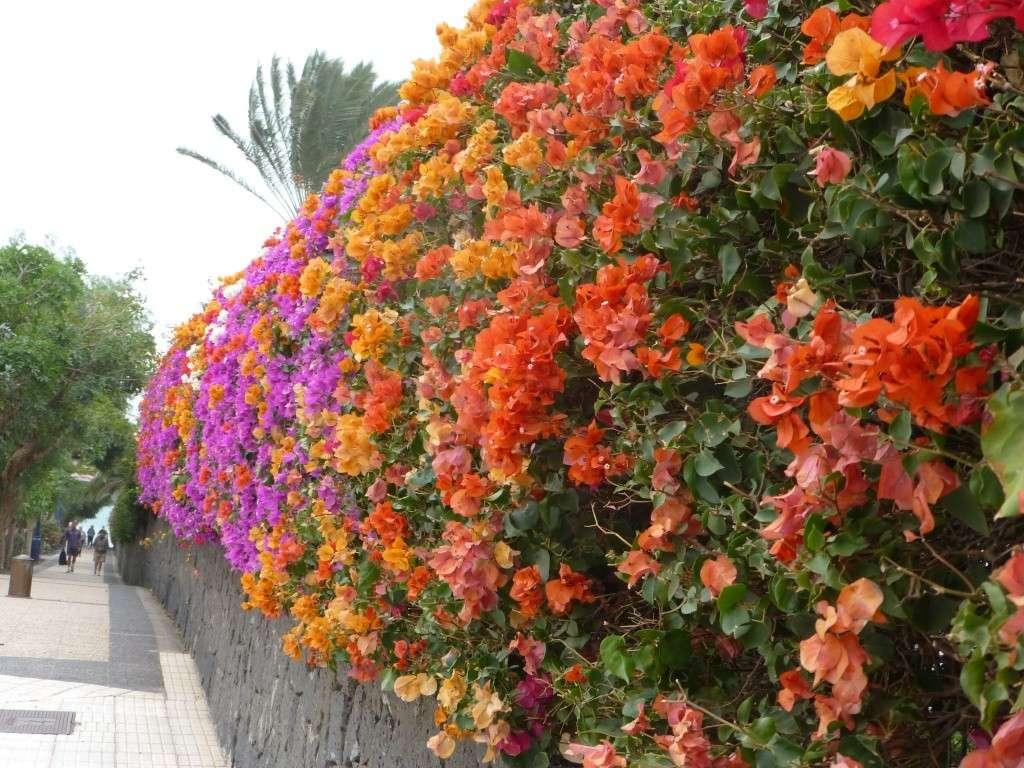 Canary Islands, Lanzarote, Playa Blanca, 2013 - Page 2 06715