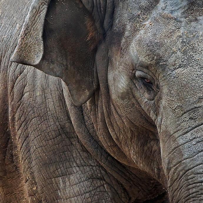 Portrait d'un éléphant 20139510