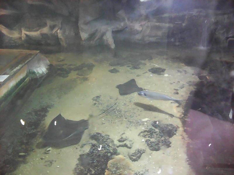 Visite de l'aquarium d'Amnéville du Dimanche 16 Avril 2017 Img_2011