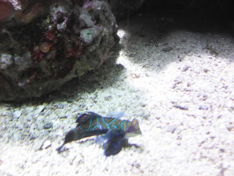 Visite de l'aquarium d'Amnéville du Dimanche 16 Avril 2017 Img_2012