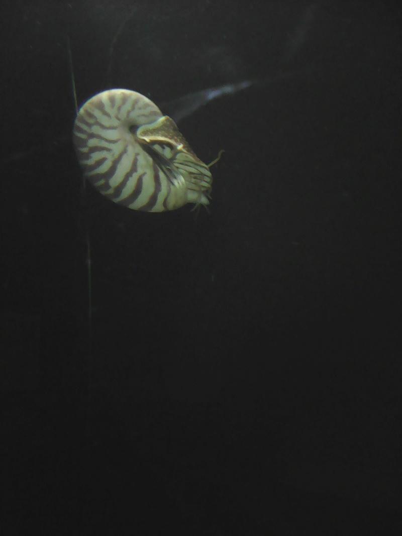 Visite de l'aquarium d'Amnéville du Dimanche 16 Avril 2017 Img_2014