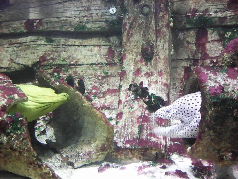 Visite de l'aquarium d'Amnéville du Dimanche 16 Avril 2017 Img_2015