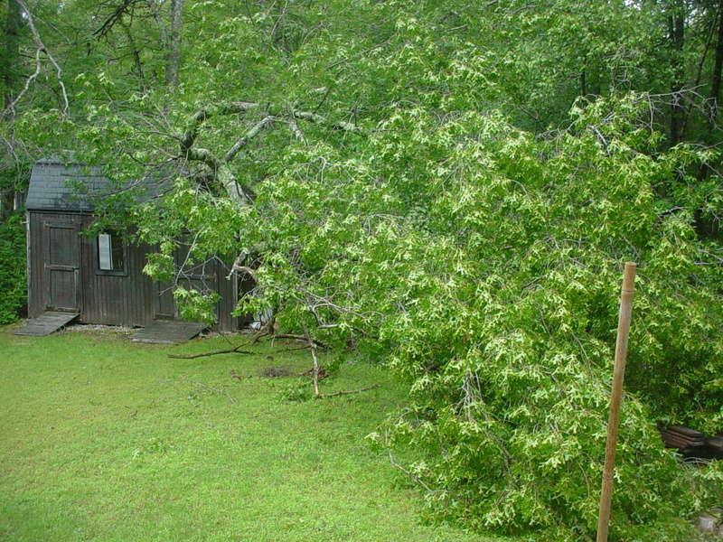 Storm damage Dsc04210