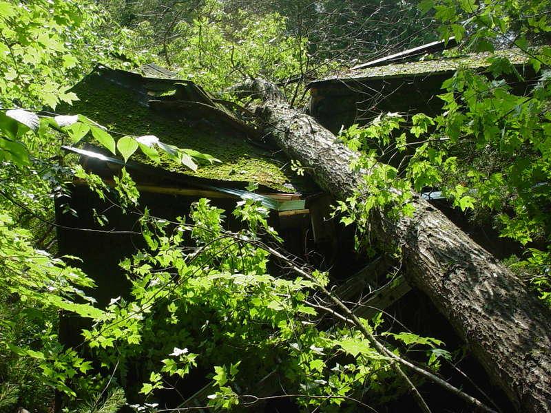 Storm damage Dsc04213