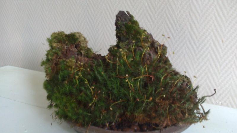 Terrarium de Mini-orchidées Dsc_0111