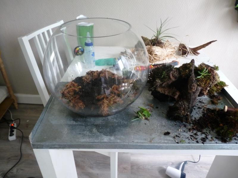 Terrarium de Mini-orchidées P1040812