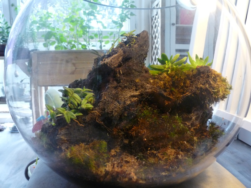 Terrarium De Mini Orchidees